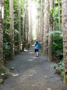 Me in the Queensland Kauri Pine grove