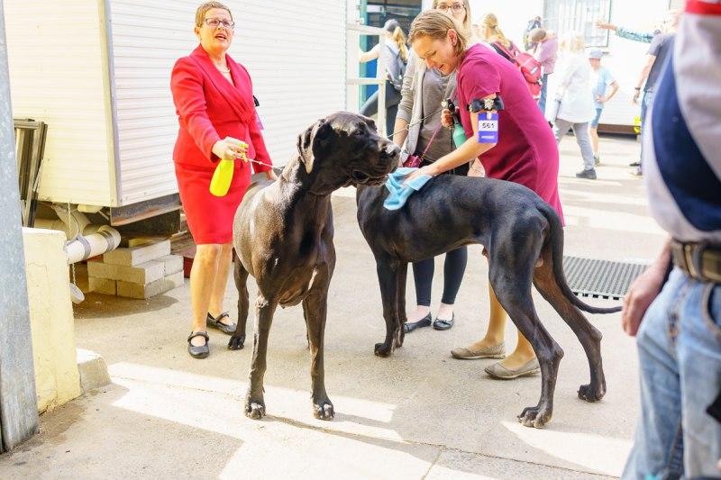 Dogs at The Ekka 2017 Gary Lum