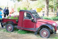 A floral ute (pick up truck) at Floriade. | SONY ILCE-7S with FE 55mm F1.8 ZA at 55mm and f/2.8, 1/1000sec, ISO 400
