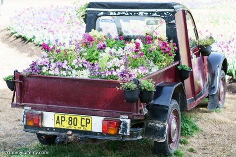 A floral ute (pick up truck) at Floriade. | SONY ILCE-7S with FE 55mm F1.8 ZA at 55mm and f/2.8, 1/800sec, ISO 400