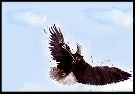 dead eagle