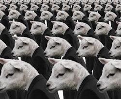 Conformity-Sheep2-250