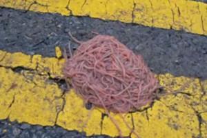 worm-balls