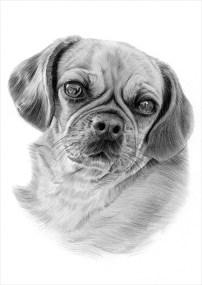 Dog_Pea