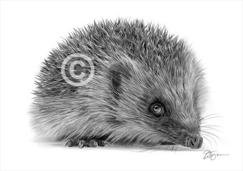 Hedgehog-1