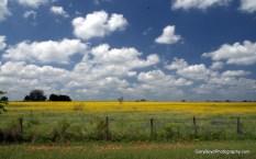 West of Frelsburg, Colorado County, Texas