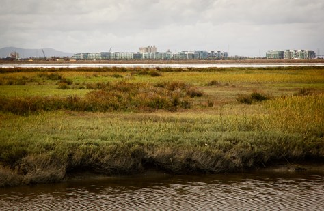 Looking across the marsh and salt ponds