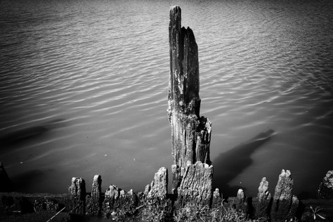 Very old river pilings