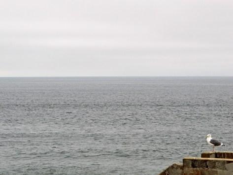 Sea Gull at Sutro Baths