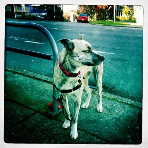 Skip the street dog
