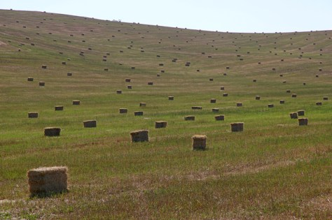 Hay bales scattered on treeless hillside