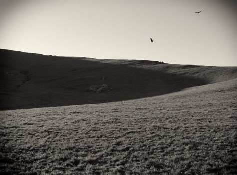 vultures circling over a green hill in black and white