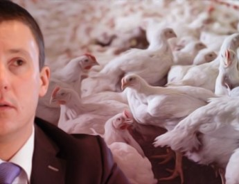 marchesi polli