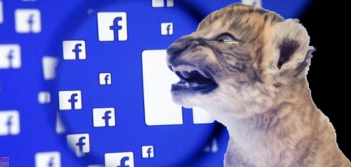 facebook leoni