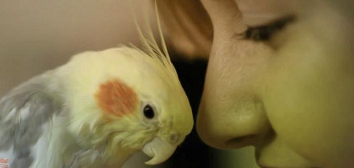 pappagallo donna