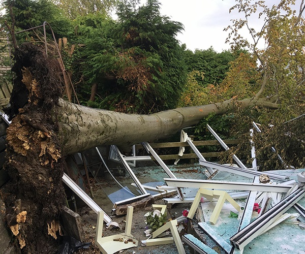 Gascoigne Garden & Tree Services - Tree Removal