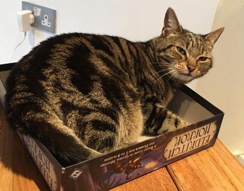 Cute cat in a board game box lid