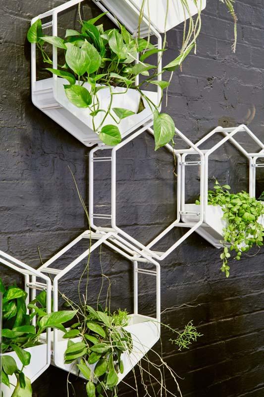 Buy a Oblica Wabe Wall Planter in Melbourne