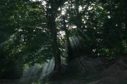 Cambodia forest