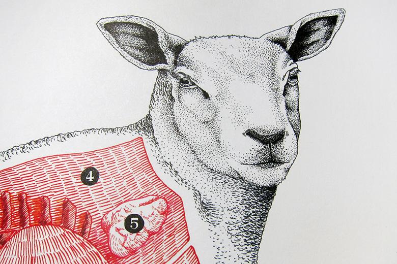 mouton_2
