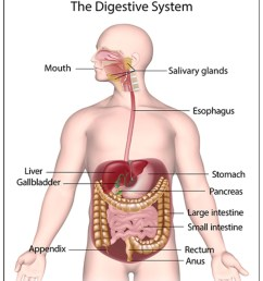 figure 1 the gastrointestinal system1 [ 1306 x 1528 Pixel ]