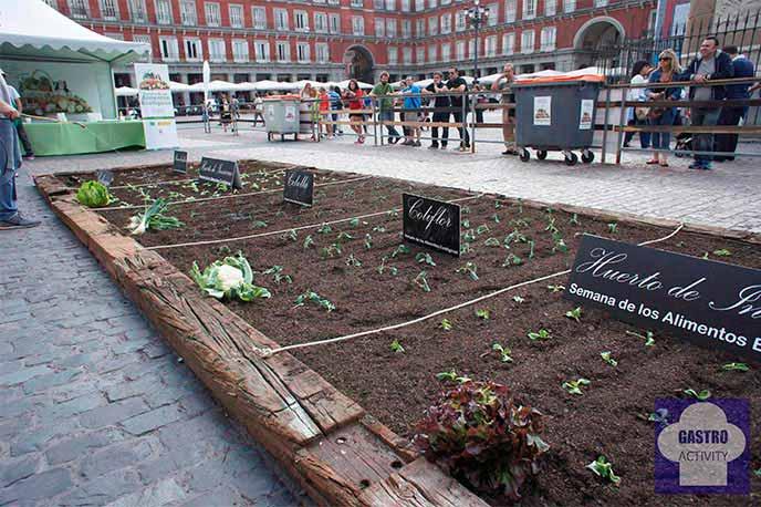 Huerto ecológico instalado en la Plaza Mayor de Madrid
