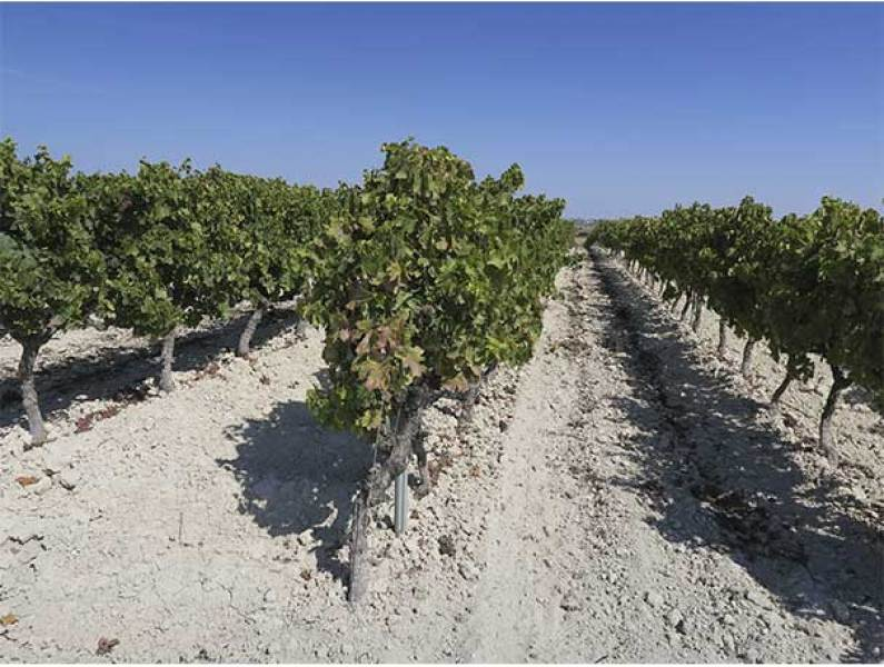 vinos de Jerez Bodegas Lustau