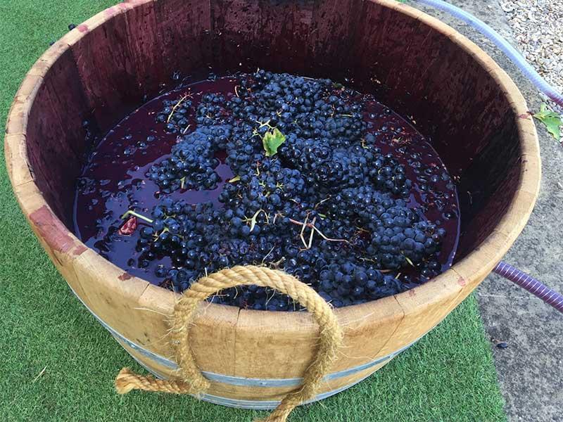 Vinos sin alcohol uvas prensadas para hacer mosto