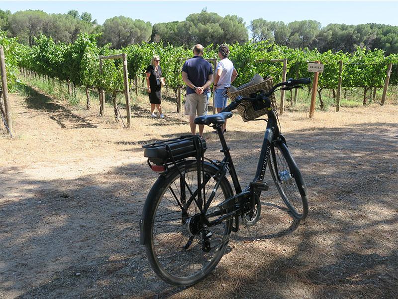 Enoturismo en Ribera del Duero en bicicleta en Finca Villacreces