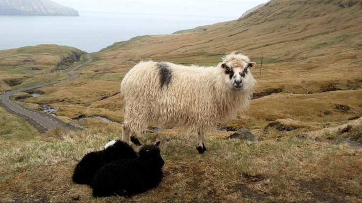 Færøerne 4