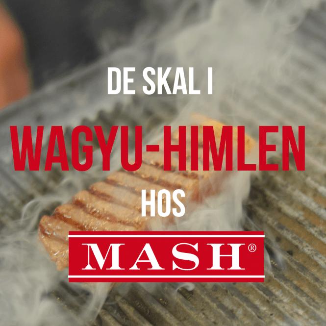 mash-WINNER