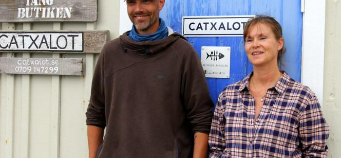 REJSEGUIDE: Seaweed safari, østers og skaldyr ad libitum i Vestsverige