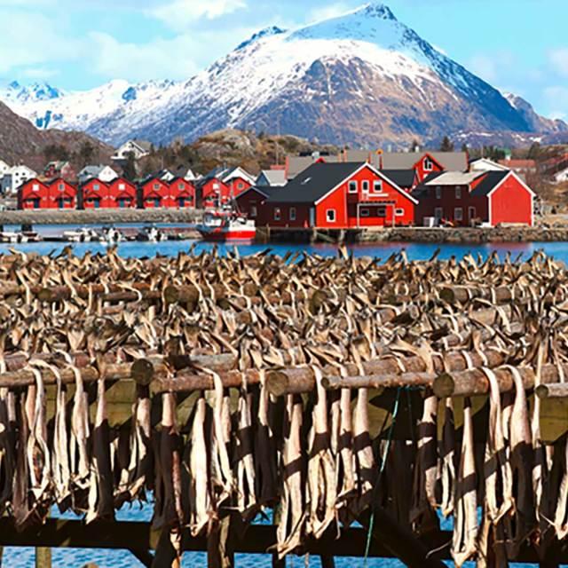 stoccafisso-norvegia