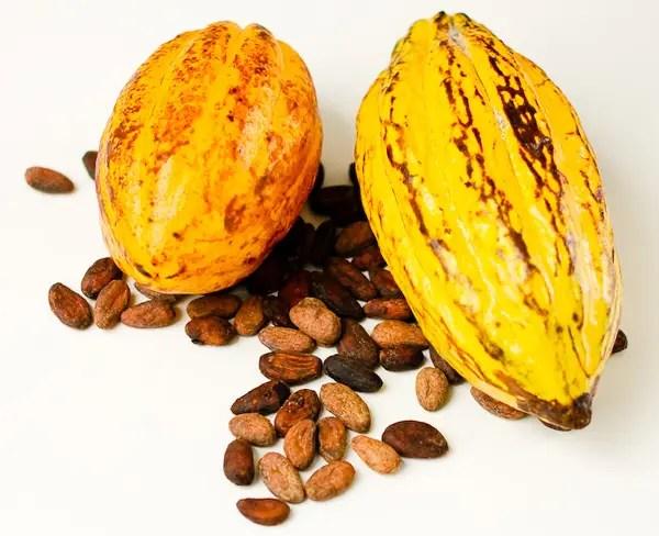 El origen y la historia del cacao y el chocolate Vdeo