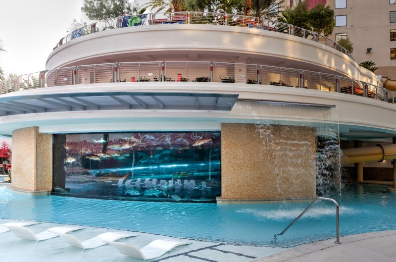 Pool & Shark Tank at the Golden Nugget