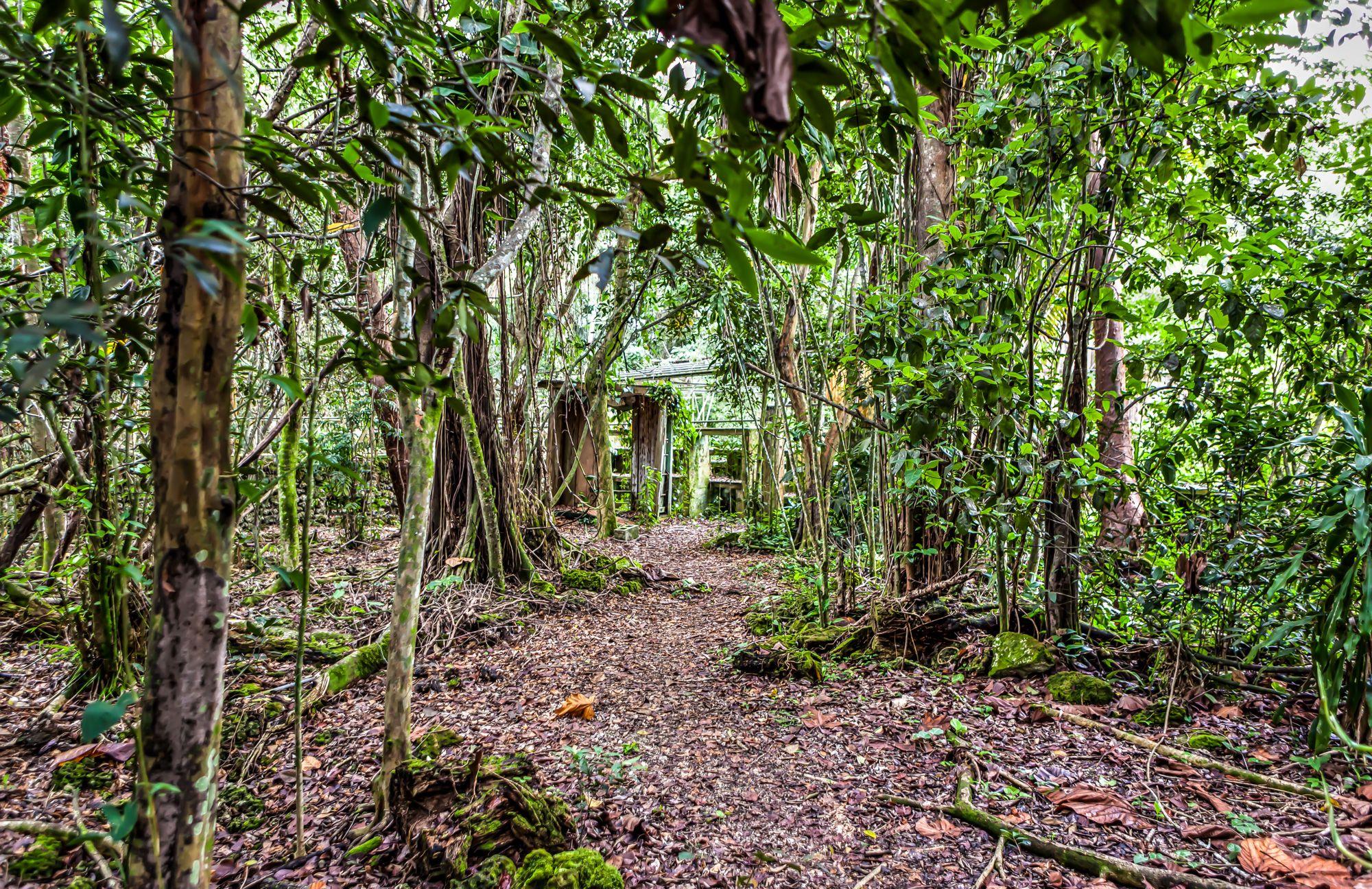 A Small Jungle Adventure Just South of Miami