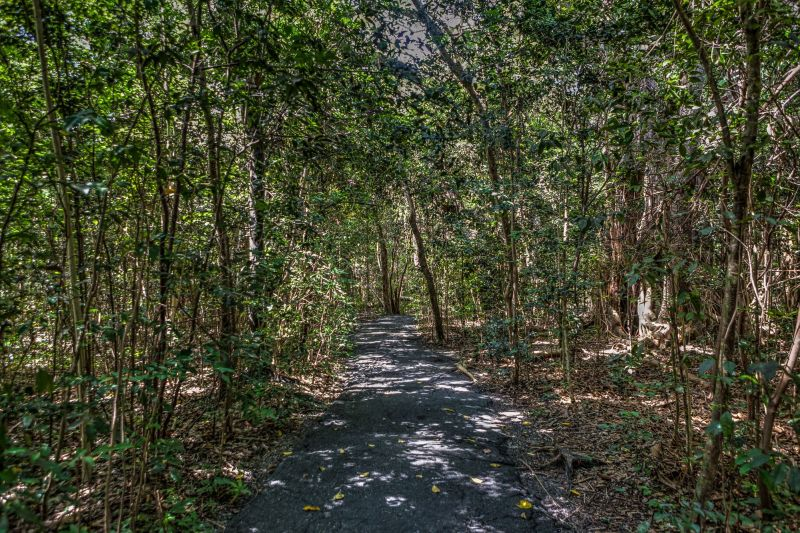 Nature Path to Vizcaya