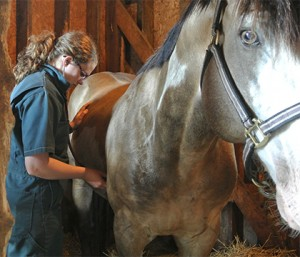 Dr. Husulak listens to lung sounds with her stethoscope in a horse with RAO.