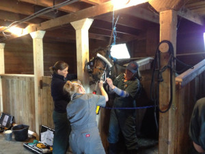 """Fourth-year veterinary science students practice equine dental care – """"floating"""" teeth to make them more evenly worn."""