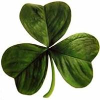 Irish Clover by George McFinnigan (Wikimedia)