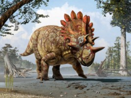 Artistic life reconstruction of the new horned dinosaur Regaliceratops peterhewsi in the palaeoenvironment of the Late Cretaceous of Alberta, Canada. Courtesy of Royal Tyrrell Museum of Palaeontology, Drumheller, Alberta. Art by Julius T. Csotonyi.