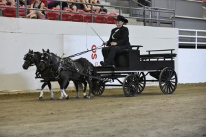 2015 - Lord Sterling Cup, Miniature Horse Show, Charlene Gale