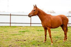 bringing-home-a-new-horse