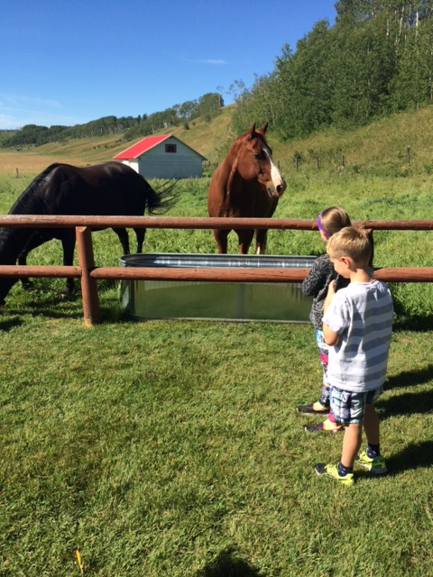 Two young guests visit with two Calgary Stampede horses