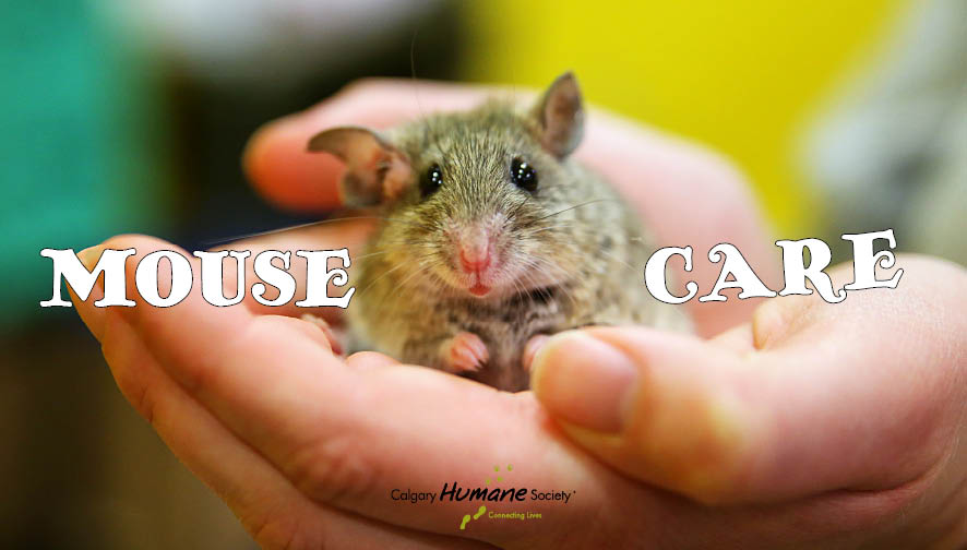Mouse-Care-1