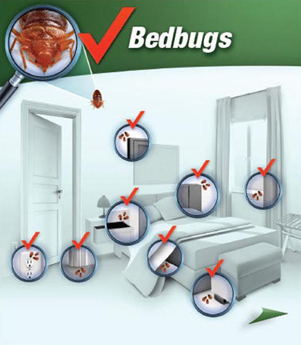 bedbug_room-punaises_chambre-1-eng