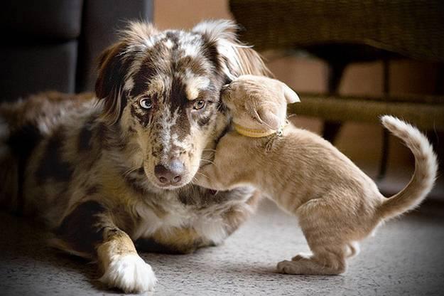 Animal Justice - pets