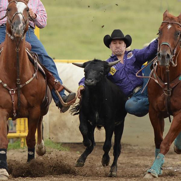 Calgary-Police-Rodeo-calf-roping