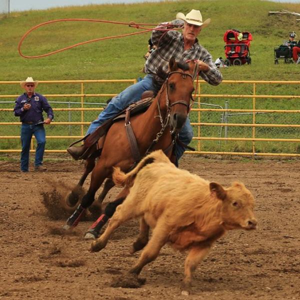 Calgary-Police-Rodeo-calf-steering