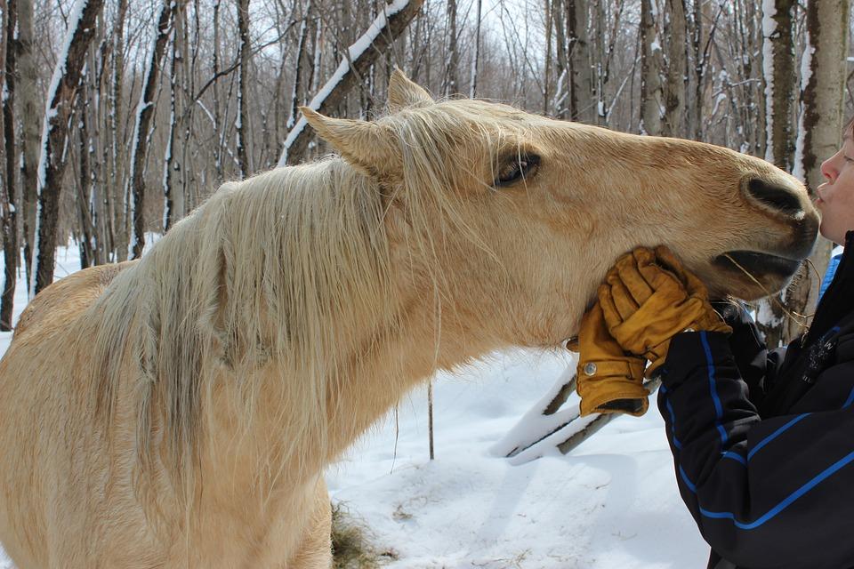 Horse Horse Head Kiss Canada Animals Love Rider